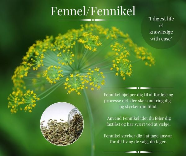 Fennel Olie